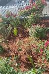 Photo of Katherine Viera's Home Garden